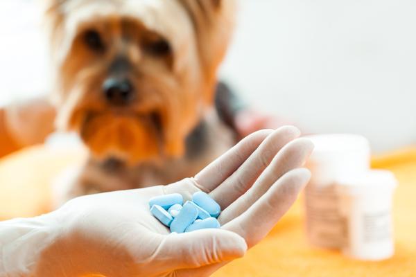 los veterinarios de cataluntildea alertan del uso abusivo de los antibioacuteticos