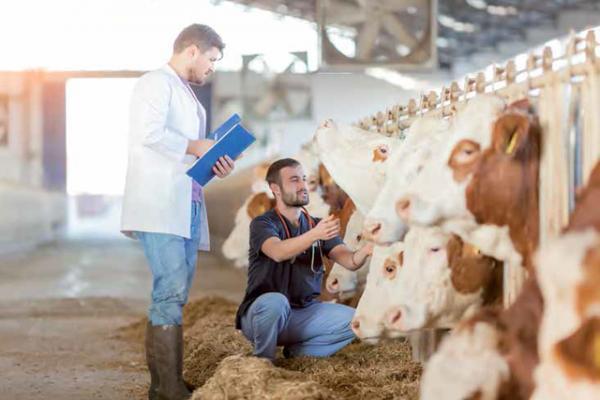 veterindustria uem y aemps organizan la jornada quotensayos cliacutenicos en veterinariaquot